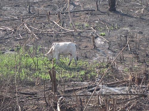 En este terreno sometido a quema había bosques amazónicos. Crédito: Mario Osava/IPS