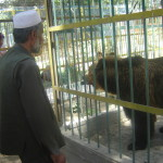 The Kabul Zoo was counted among Asia&#039;s finest before war ravaged Afghanistan. Credit: Killid